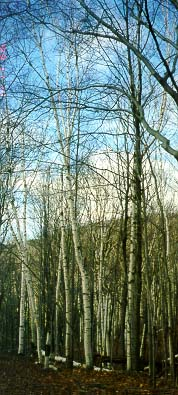 Osler Bluffs Blue Mountain 77