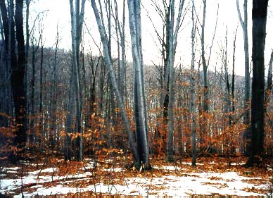 cedar glen mature personals Cedar glen arbor lake  the clay cliffs natural area north of leland is the newest recreation area in  the property includes mature northern .